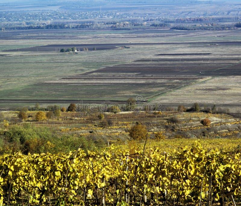 Landscape in fall season