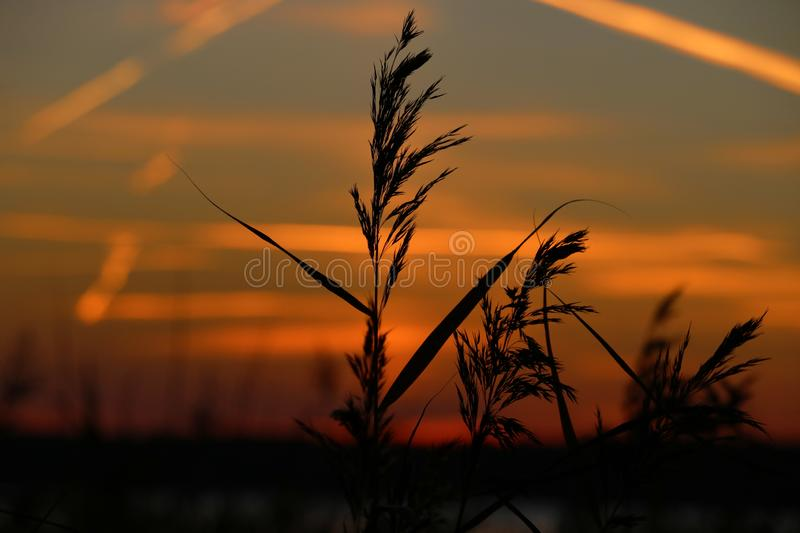 Landscape fantastic sunset on the wheat field sunbeams glare.  stock image