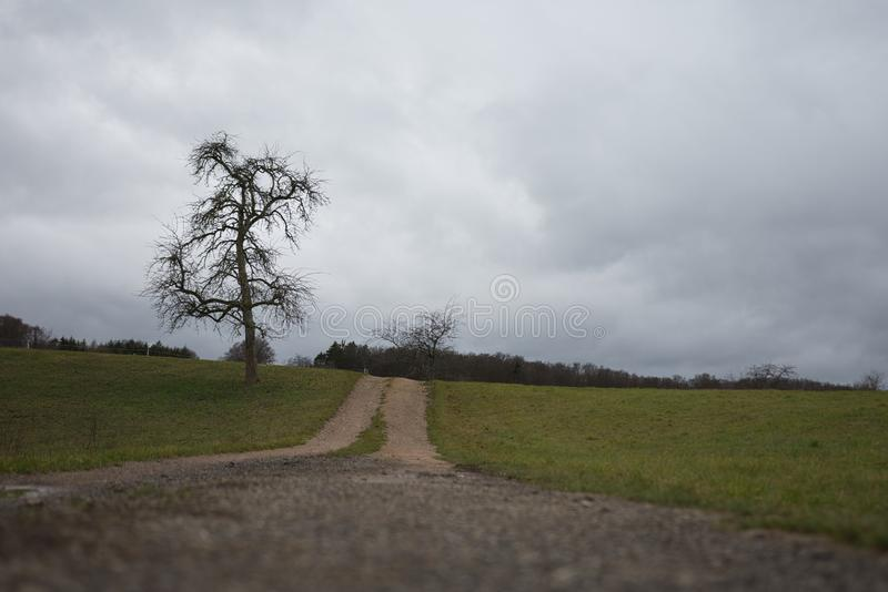 Landscape of a field with a tree and cloudy sky stock image