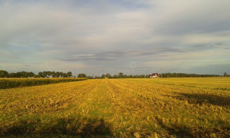 Landscape of fields stock image
