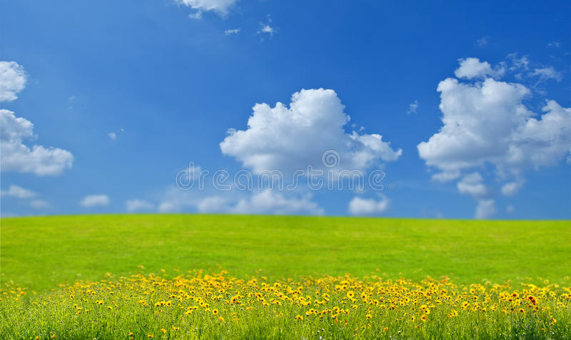 Download Landscape with flowers stock image. Image of season, colorful - 14561903