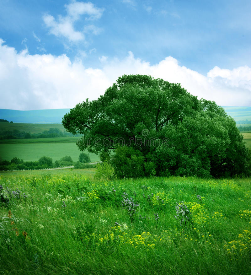 Download Landscape With Flowers Field Stock Image - Image: 27697579