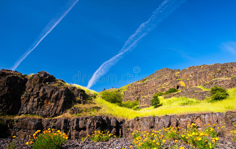 Landscape with flowers and grass on the rocks. Landscape of bright orange flowers in the foreground against a background of rock cliffs with shrubs and grass on royalty free stock photos