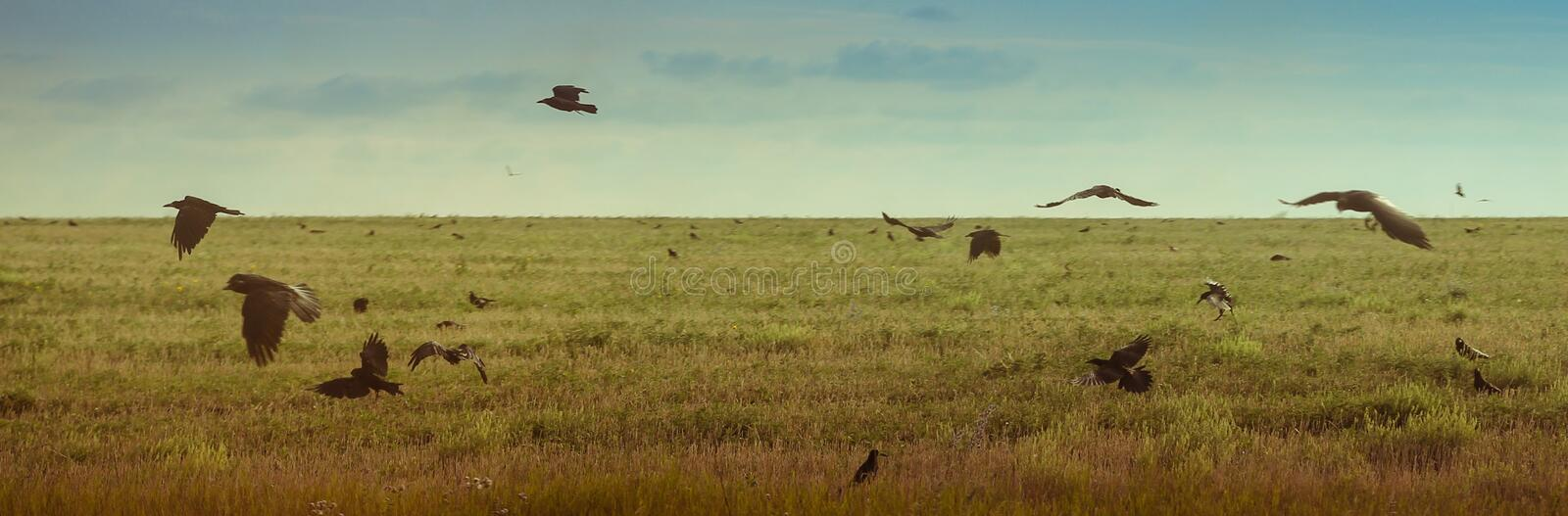 Landscape with flying birds at sky. Landscape with flying birds at sunny sky on green field at summertime; brightful and warm stock photography