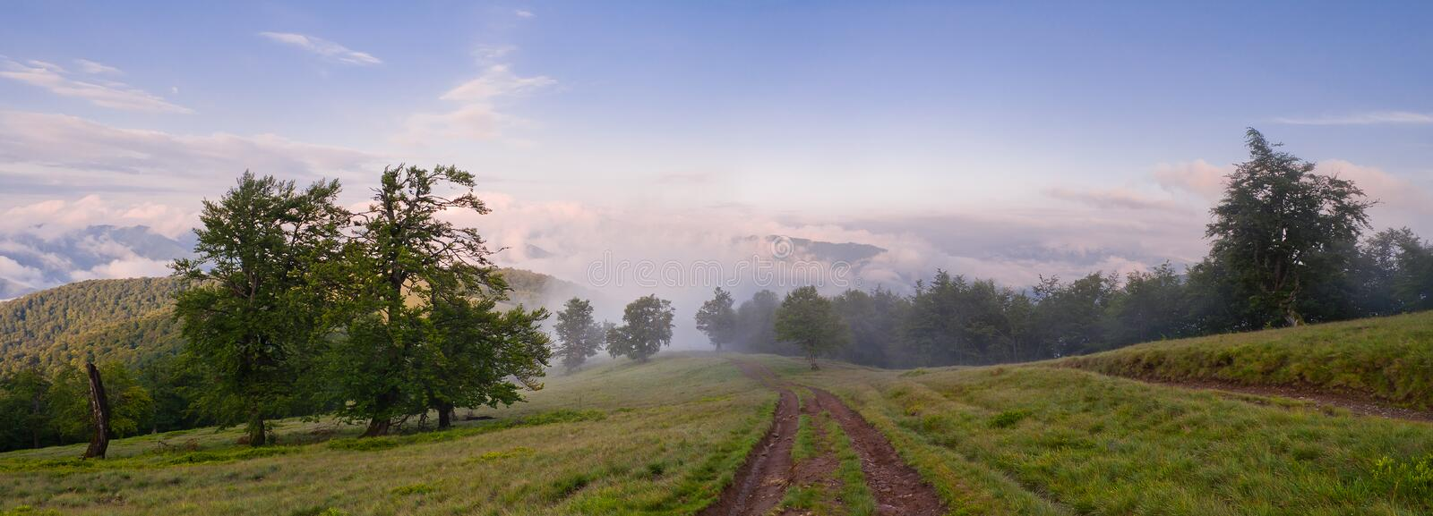 Landscape with fog in mountains and rows of trees in morning. Summer mountain landscape. Landscape with fog in mountains and rows of trees in morning royalty free stock photo