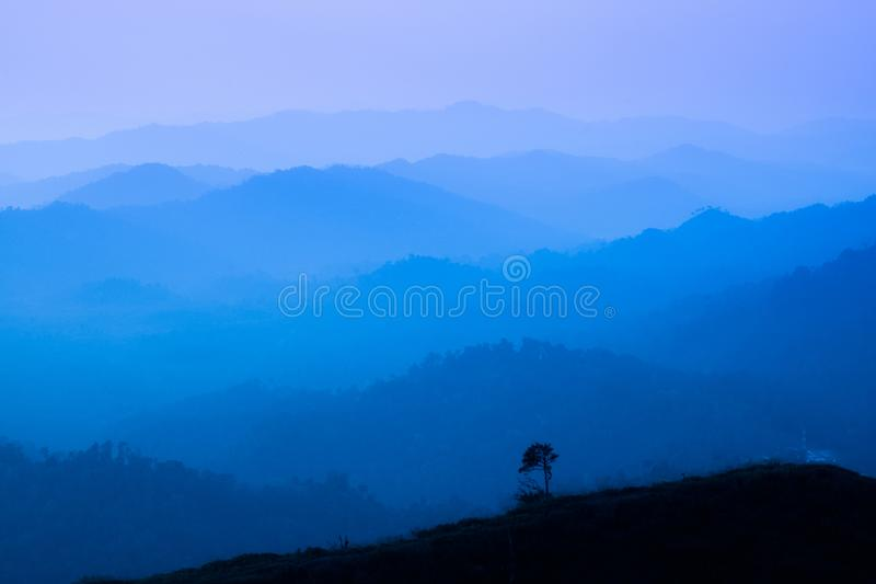 The landscape of foggy autumn forest valley, mystical valley background. Pine trees silhouettes in a morning fog, blue colors.  royalty free stock photo