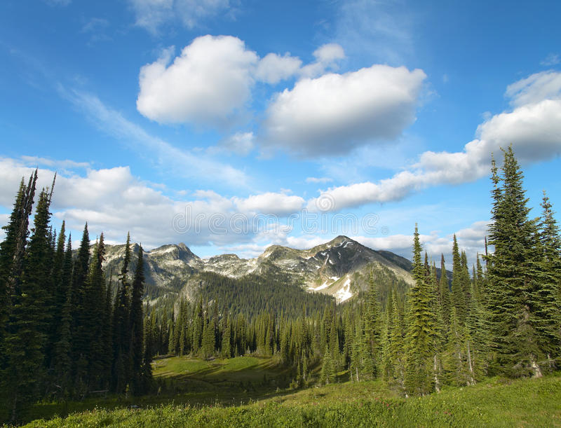 Landscape with forest in British Columbia. Mount Revelstoke. Can. Ada. Horizontal stock image