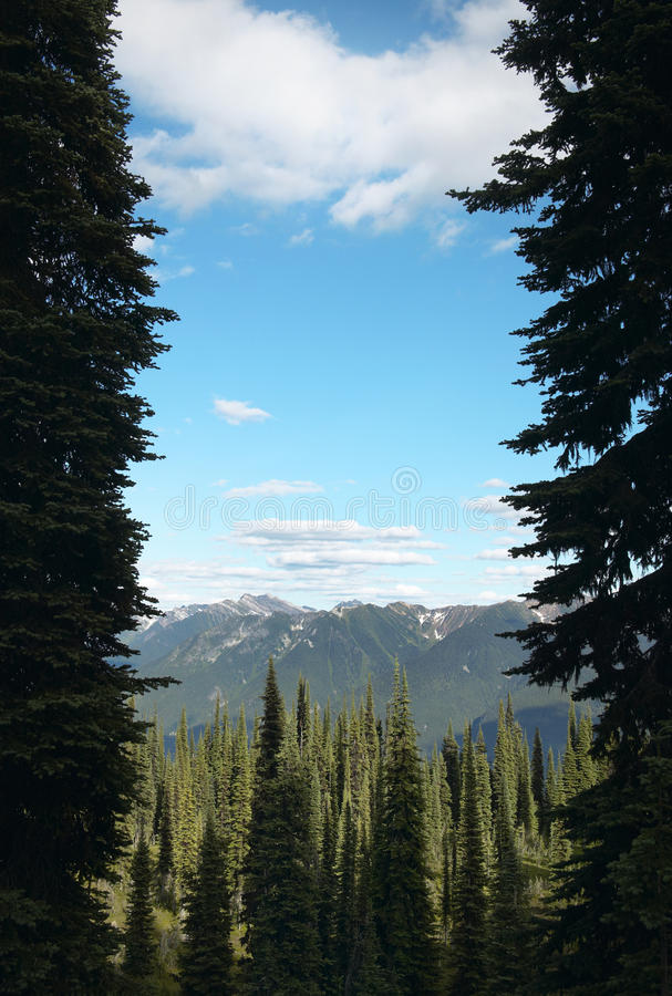 Landscape with forest in British Columbia. Mount Revelstoke. Can. Ada. Vertical royalty free stock image