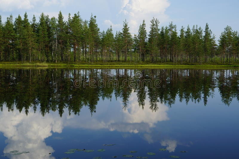Landscape forest lake with reflection of clouds in the sky and pine trees on the beach, summer. Landscape forest lake with reflection of clouds in the sky and royalty free stock image
