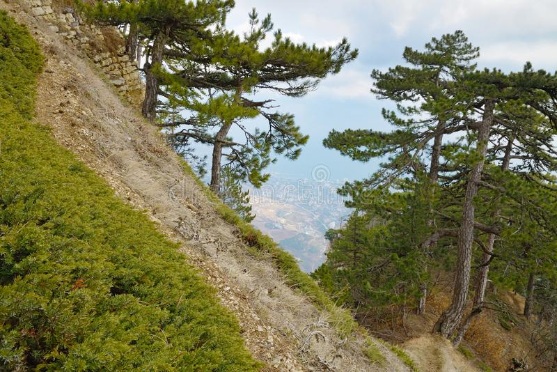 Landscape at a forest path on a steep slope. Landscape at a forest narrow path on a steep mountain slope with pine forest. Green juniper on foreground. View of royalty free stock photography