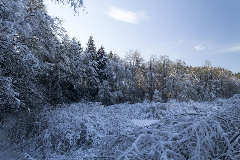 Landscape of forest in winter. Croatia royalty free stock images