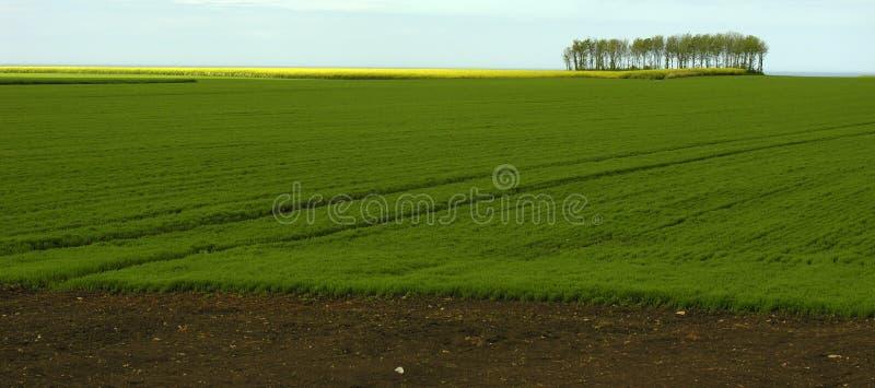 Download Landscape in France stock image. Image of spring, rapeseedoil - 119007