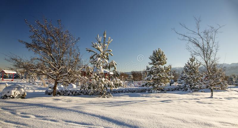 Fresh snow in the morning in the park. Landscape with fresh snow in the morning in the park royalty free stock photography