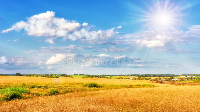 Landscape of gold field on bright sunny day. Blue sky with white clouds over yellow meadow. stock photos