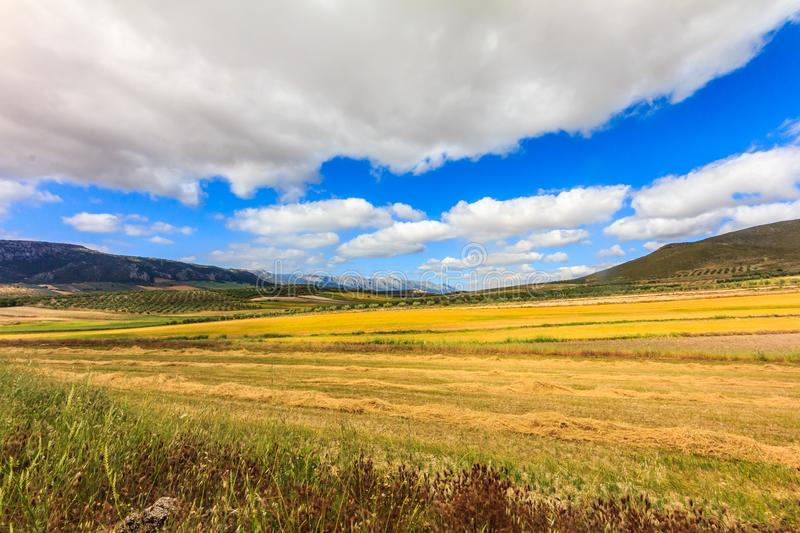 Landscape of golden fields. And clouds, Granada Province, Spain royalty free stock photography