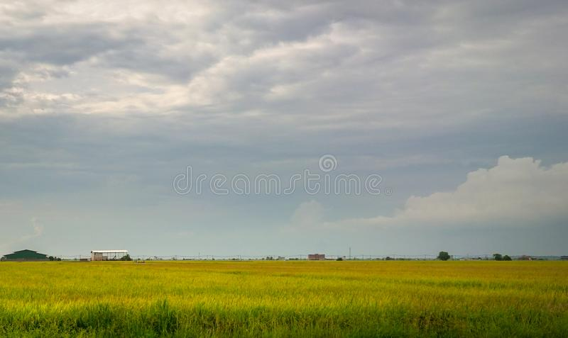 View of rice paddy field stock image