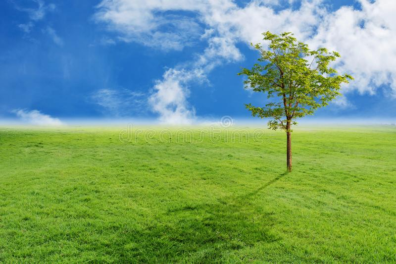 Landscape of grass and blue sky stock images