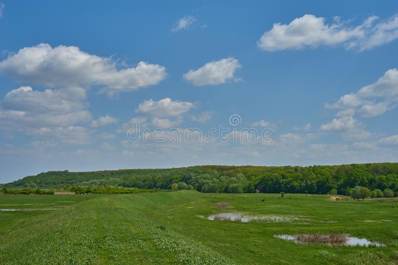 Landscape with a grassy embankment a forest in the distance and a beautiful sky with clouds. Landscape with a grassy embankment a forest in the distance and a stock photo