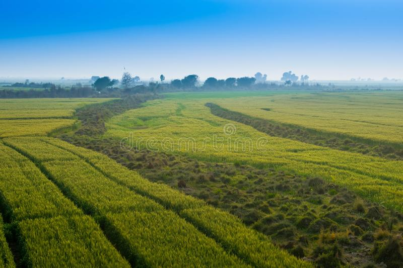 Landscape,green fields with blue sky stock photos