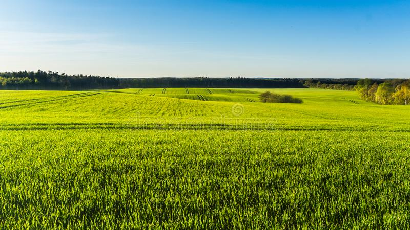 Landscape with green fields and forest in spring season royalty free stock images
