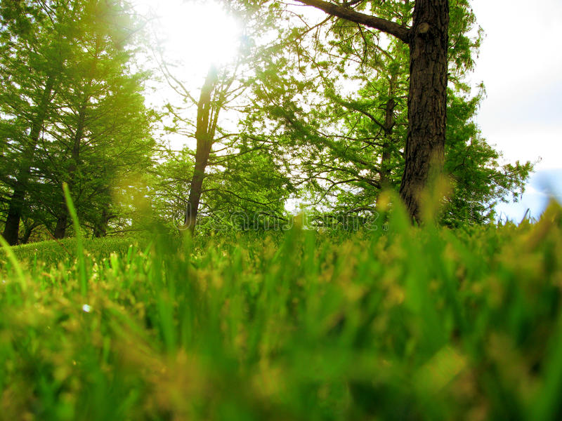Landscape. Green Grass and Trees stock photos