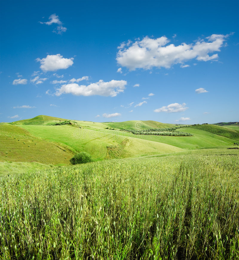 Landscape for green hill of wheat stock photography