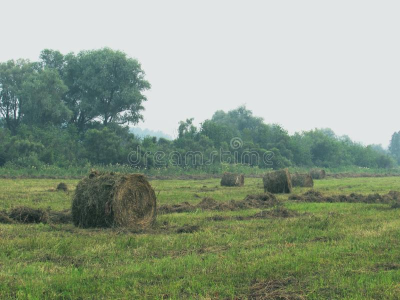 Landscape with green meadow, forest in the distance and twisted haystacks of dry brown hay on a foggy day royalty free stock images