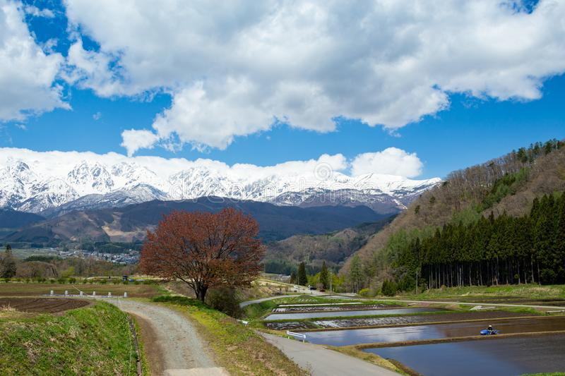 Landscape with Hakuba mountain range and cherry blossoms. Beautiful scenery of spring with cherry blossom trees on the back of Hakuba mountain range royalty free stock images