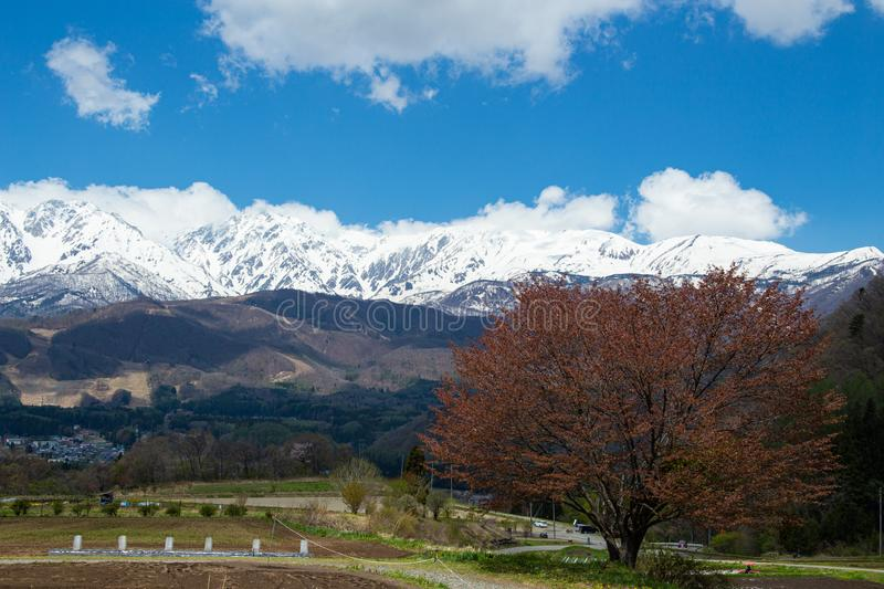 Landscape with Hakuba mountain range and cherry blossoms. Beautiful scenery of spring with cherry blossom trees on the back of Hakuba mountain range stock images