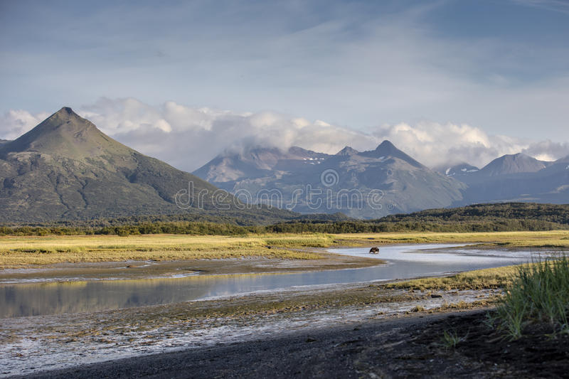 Landscape of Hallo Bay. A view of Hallo Bay's surrounding mountains and a fishing grizzly bear. Photo taken on August, 2016, Hallo Bay, Katmai National park stock image