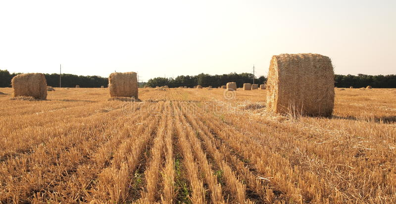 Landscape with hay roll stock photography