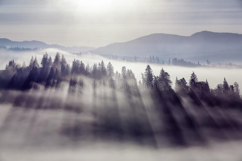 Landscape of high mountains and forests. The sun rays are shining through the fog. The play of light and shadows. Panoramic view. Landscape of high mountains stock images