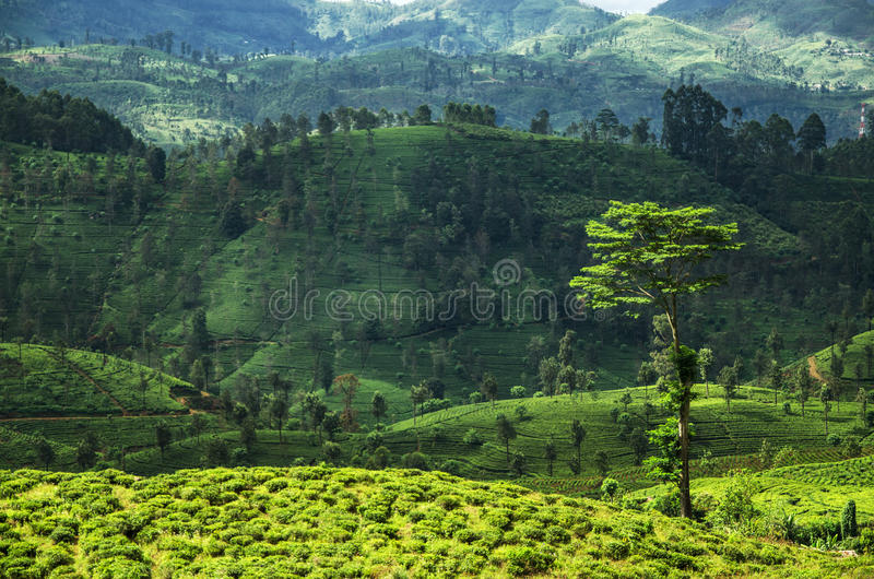 Landscape Of The Hill Country Sri Lanka Stock Photo Image Of Farm Nature 64534936