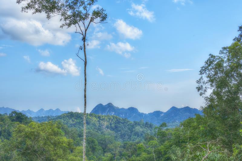 Landscape of Hills in the Forest with Tree and Trees on a Clear Sky with Cloud. Landscape Photograph of Hills in the Forest with Tree, Trees and Plants on a stock images