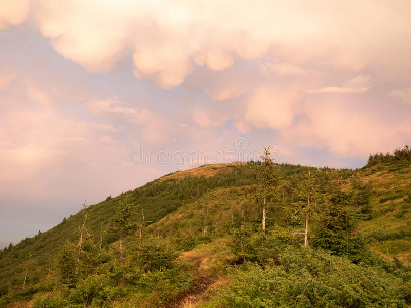 Landscape of hillside at summer. Carpathians mountains, west Ukraine. Green trees and plants on hill. Big clouds in the stock image