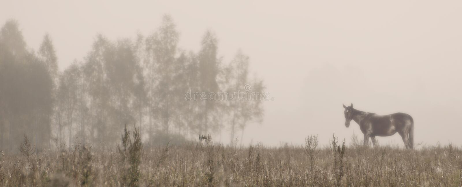 Landscape with horse and fog royalty free stock photography