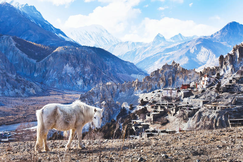 Landscape with horse from Nepal, Tibet stock images