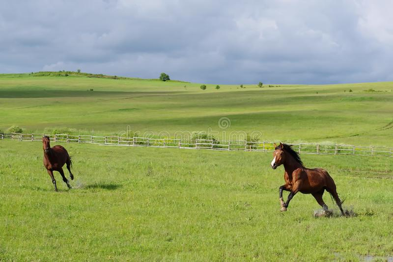 Landscape and horses running royalty free stock photos