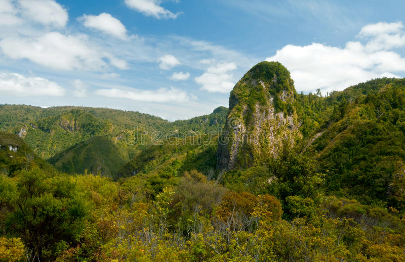 A landscape image of beautiful valley in Coromandel, New Zealand royalty free stock photo