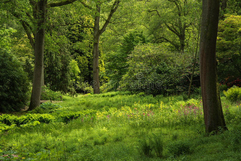 Landscape image of beautiful vibrant lush green forest woodland. Landscape image of vibrant lush green forest woodland scene royalty free stock image