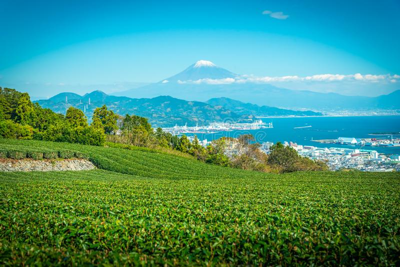 Landscape image of Mt. Fuji with green tea field at daytime in Shizuoka, Japan stock image