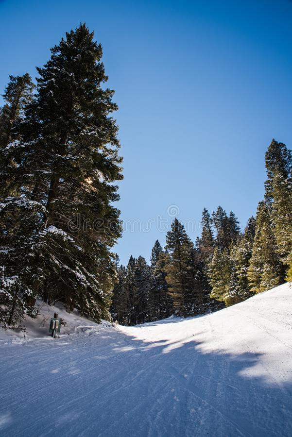 Landscape image in a snow covered forest. A snow covered ski run in Cloudcroft, New Mexico during the winter on a sunny day royalty free stock photography