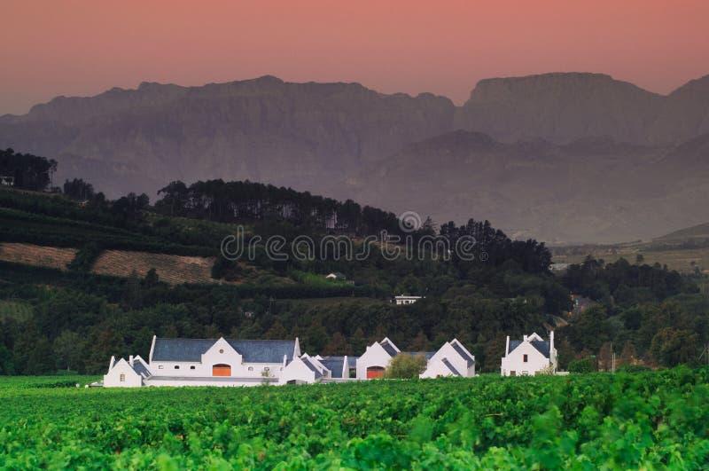 Landscape image of a vineyard, Stellenbosch, South Africa. Vineyards of Stellenbosch wine region with a bleautiful sky at sunset, South africa stock photography