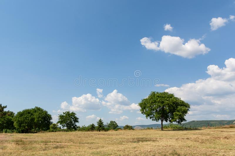 Landscape image with a yellow dry meadow, a green tree and a blue sky with white clouds royalty free stock photos