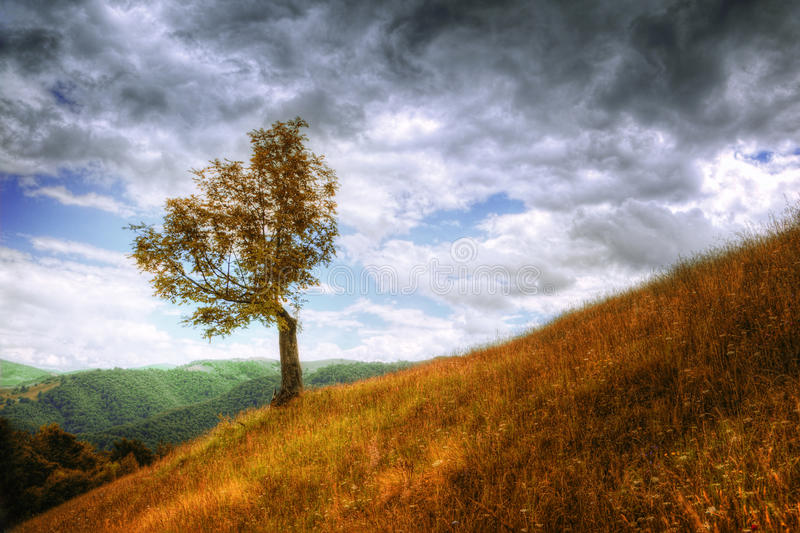Landscape - isolated tree and autumn grass stock images