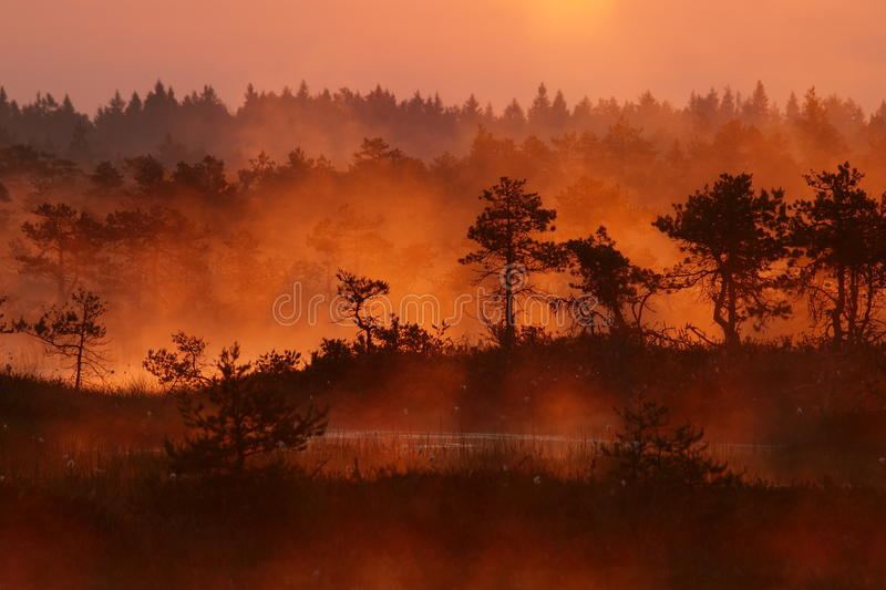 Download Landscape of Kakerdaja Bog stock image. Image of estonia - 21747723