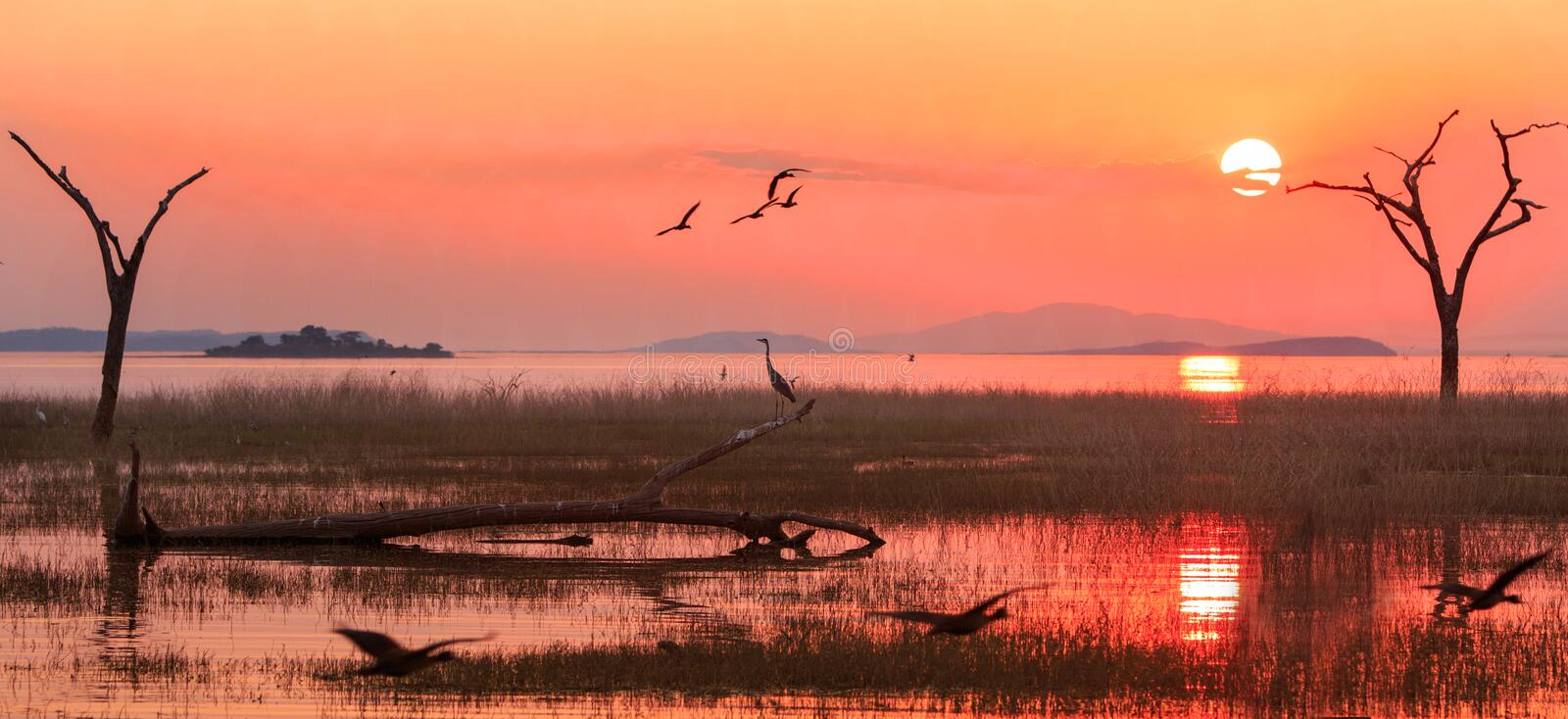 Landscape of Lake Kariba with a bright orange sunset sky with egyptian geese and a silhouette of a heron, Zimbabwe. Panorama of a sunset over Lake Kariba with a royalty free stock photography