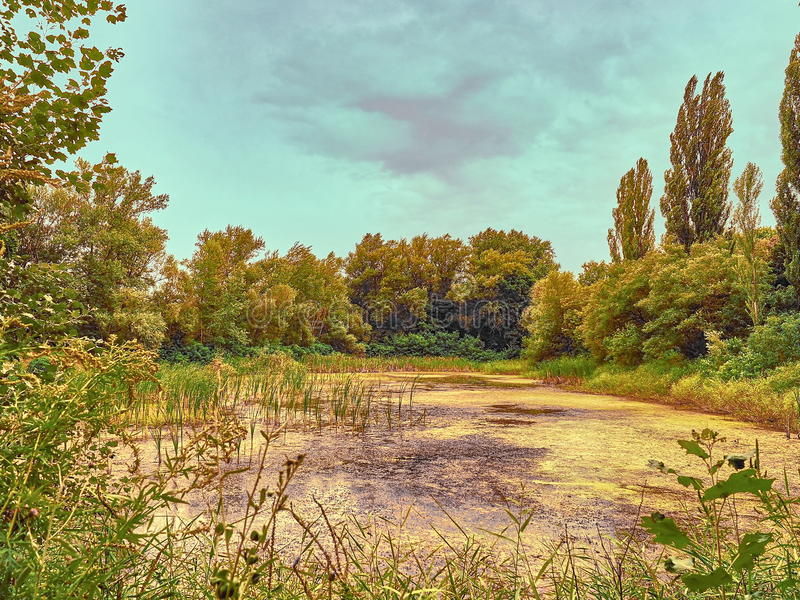 Landscape lake in the park royalty free stock images