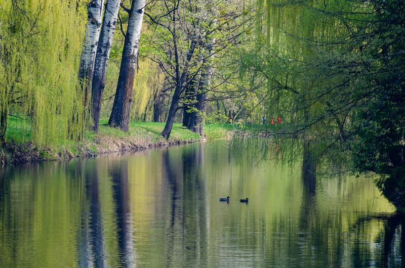 Landscape, lake among trees in the arboretum Alexandria, Ukraine royalty free stock images
