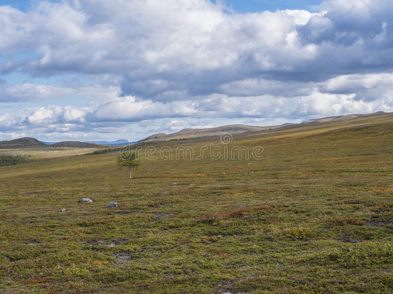 Landscape of Lapland nature at Kungsleden hiking trail with lonely birch tree, colorful mountains, rocks, autumn colored bushes. Landscap of Lapland nature at royalty free stock photos